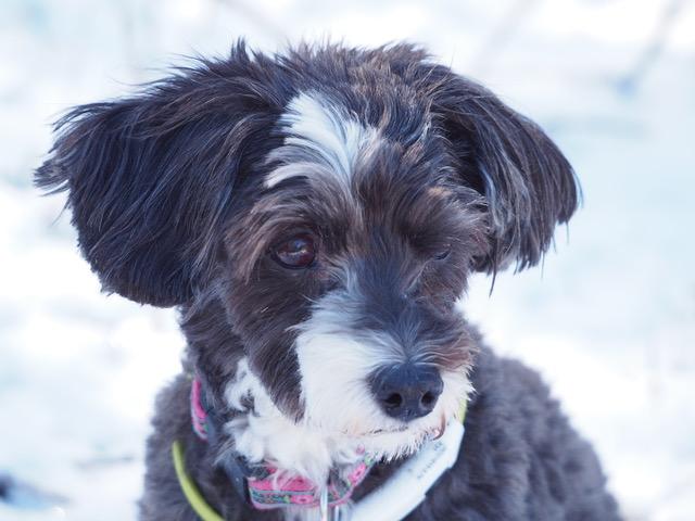 Hauters Hauspost 6: Der Jazz-Hund und das Gardinen-Design